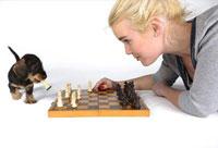 Знаменитый исследователь собак утверждает, что их интеллект не уступает интеллекту двухлетних детей