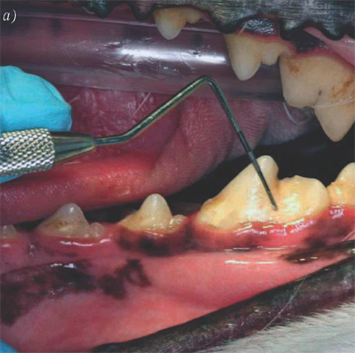 Пародонтит- оценка налета и зубного камня